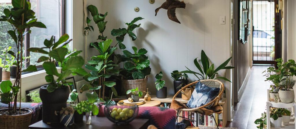 Las mejores plantas para interiores noticias adondevivir - Mejores plantas para interior ...